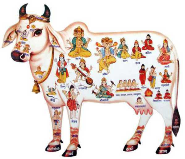 Cow Mantra - Rituals & Mantra to Worship Cows, Cow Puja
