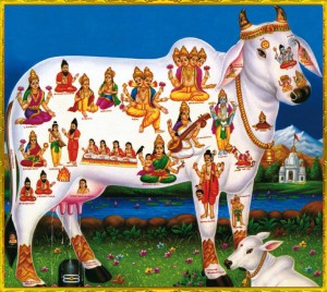 Kamadhenu - Go Mata, the cow goddess with the gods embedded in her body